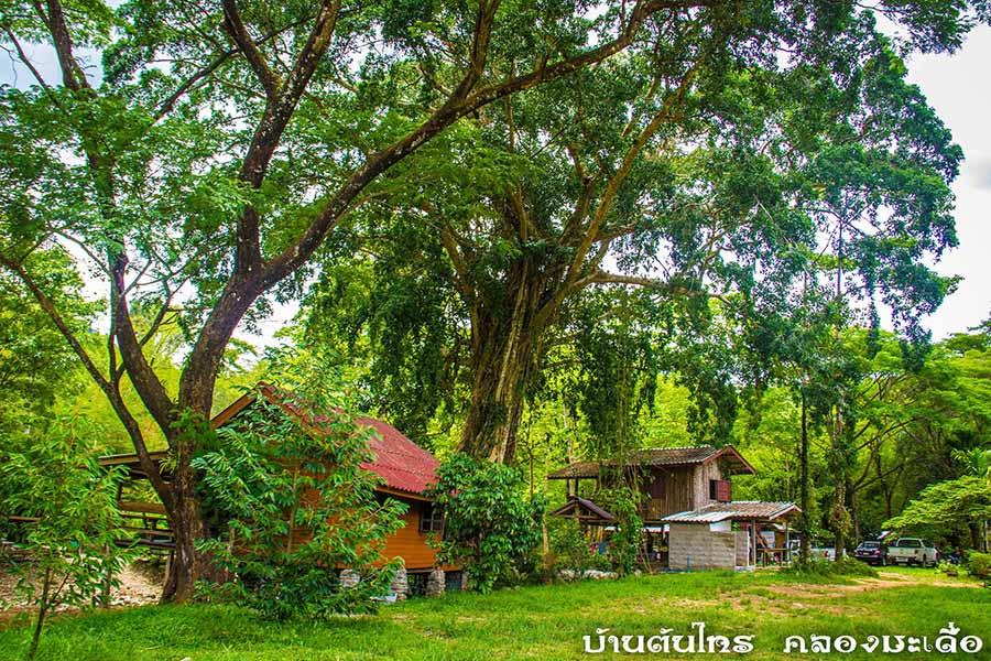 บ้านพักกลางป่า