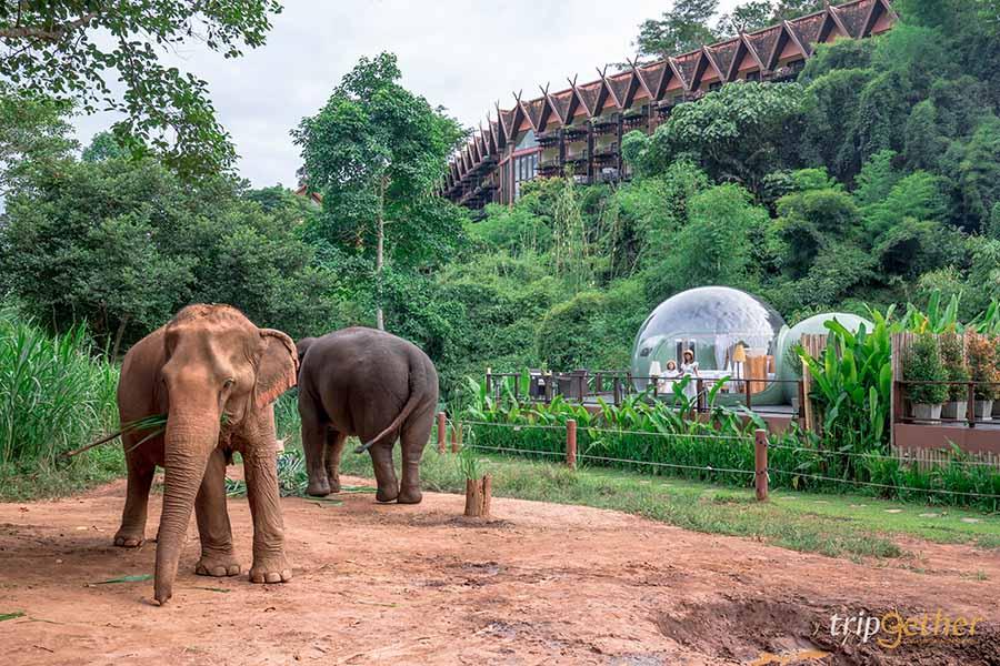 5 จุดเช็คอินดูช้างทั่วไทย เที่ยวชิลล์ พร้อมสัมผัสช้างน่ารัก
