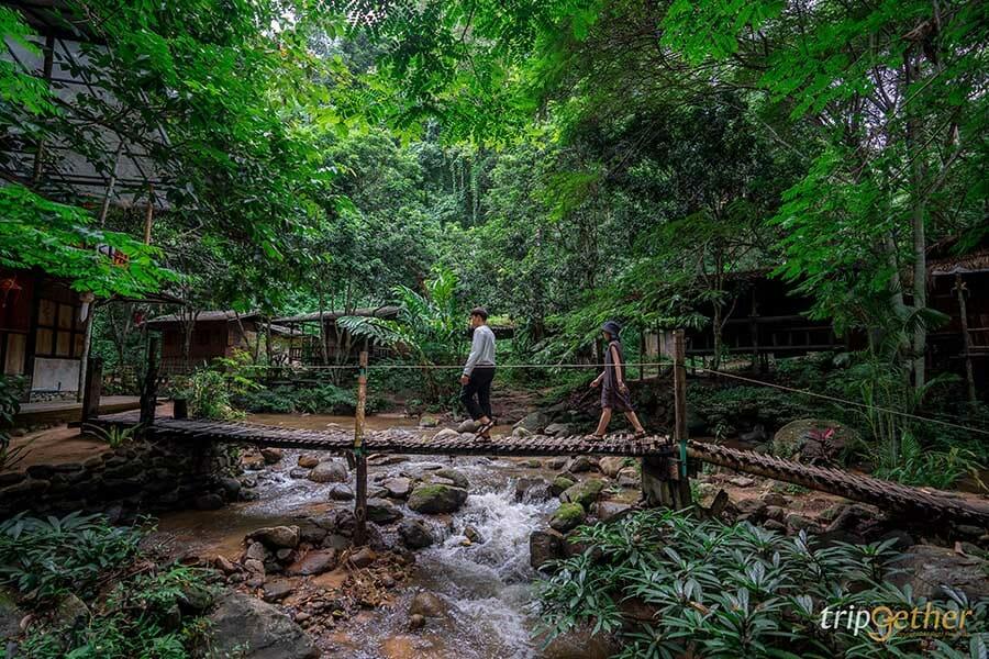 5 หมู่บ้านกลางป่า เชียงใหม่ หนีงานยุ่ง มุ่งไปเช่าป่าสักคืน