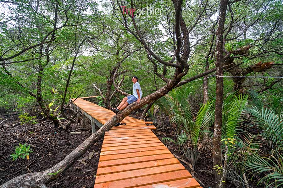 Ban_Na_Nai_mangrove_forest-7