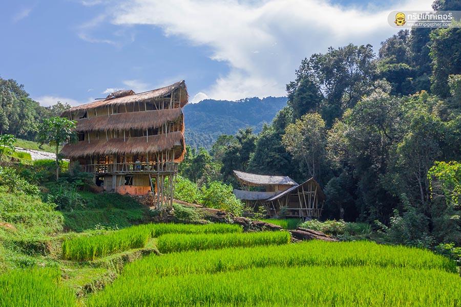 Giantbamboo01
