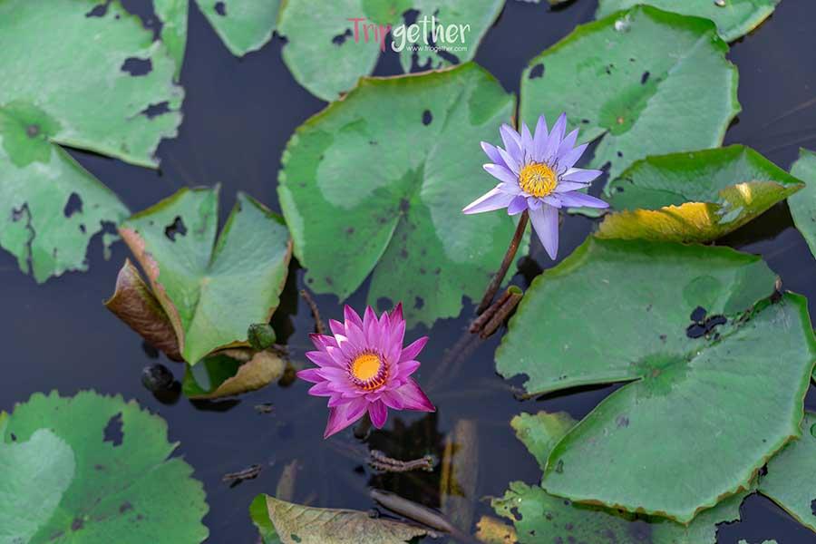 Saphan_mai_thung_rangsit-42