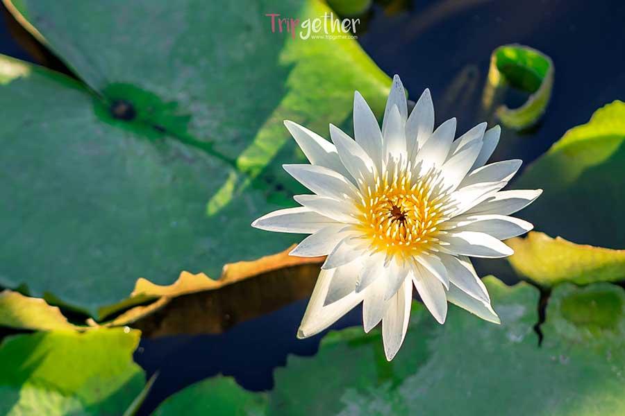 Saphan_mai_thung_rangsit-45