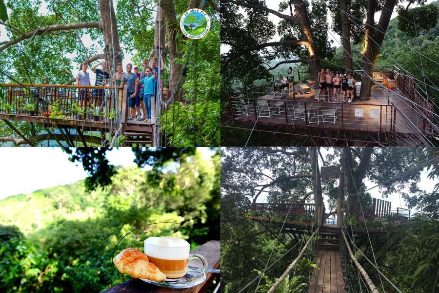 Tree-Bridge-Coffee